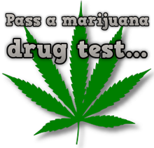 marijuana drug test leaf
